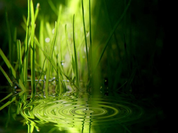 e0b8a3e0b8b9e0b89be0b8a0e0b8b2e0b89ee0b898e0b8a3e0b8a3e0b8a1e0b88ae0b8b2e0b895e0b8b4-greenwallpaper-bamboo-agua-water-bambu-wallpaper